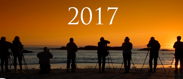 Bing 2017 year in review quiz
